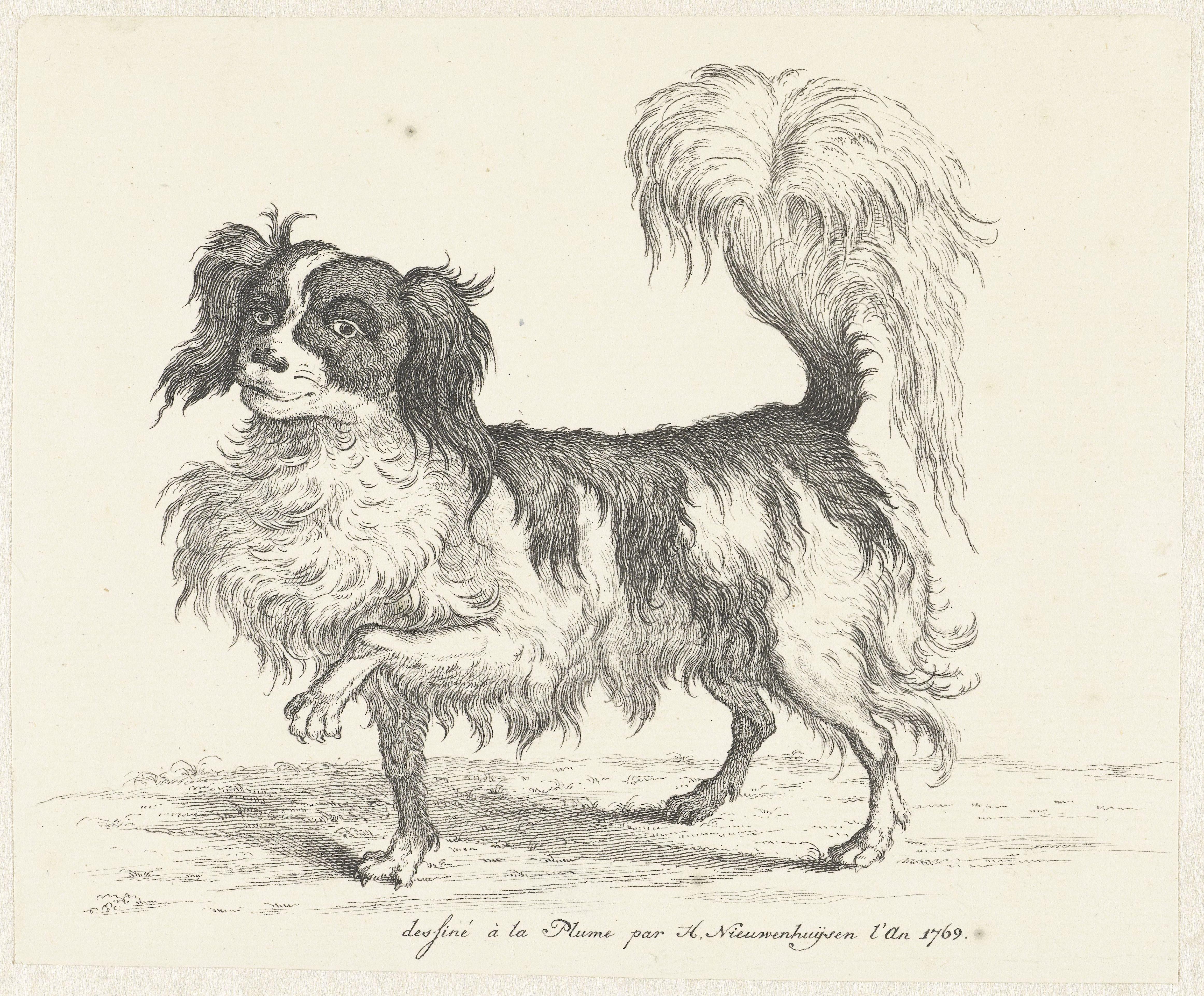Werken Met Liefdesenergie. De Hond